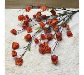 Букет физалис оранжевый