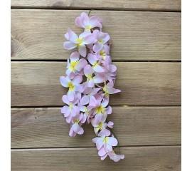 Гроздь плюмерия нежно розовая