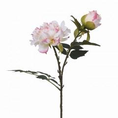 Гілка півонія з бутоном білий з рожевим