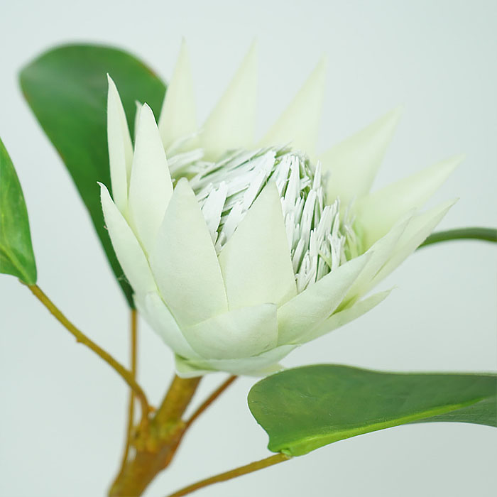 "Ветка цветок ""Протея"" 42 см - белая"