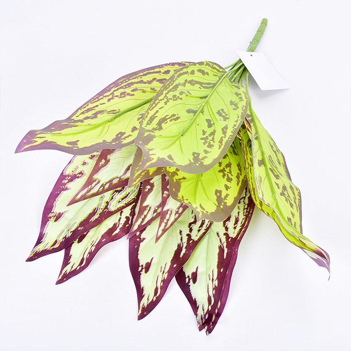 Букет зелени - аглаонема желтая