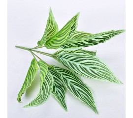 Букет аглаонема зеленая в полоску