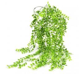 Букет свисающий рускус зеленый