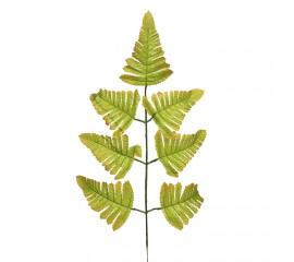Ветка листики папоротника оливковая