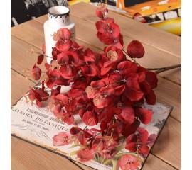 Букет эвкалипт красный 45 см