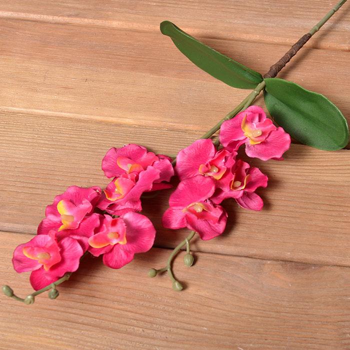 Ветка орхидея с листьями малиновая