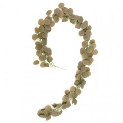 Лиана эвкалипт оливковый 2 м