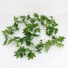 Лиана клен зеленый