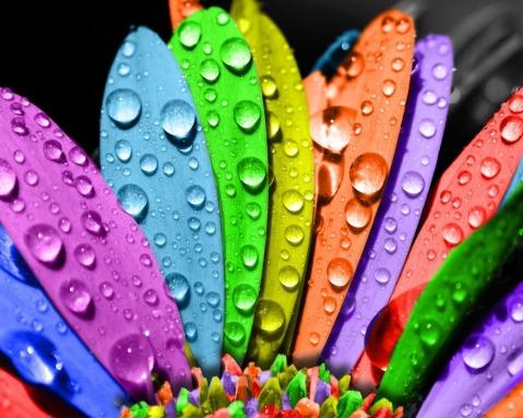 Цветотерапия цветами