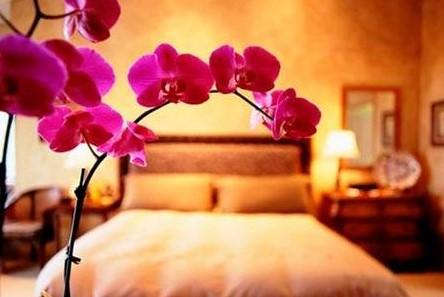 искусственные цветы по правилам Фен-Шуй
